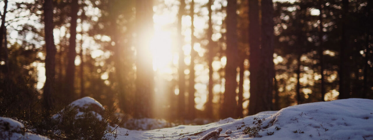 Vinterskog Gagnefsbostäder